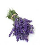 French Lavender Products to Buy Online. Lavender, Soaps from France